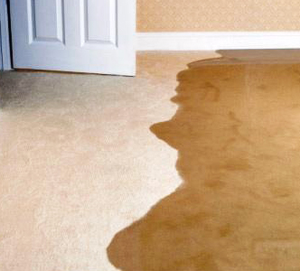 carpet with water damage
